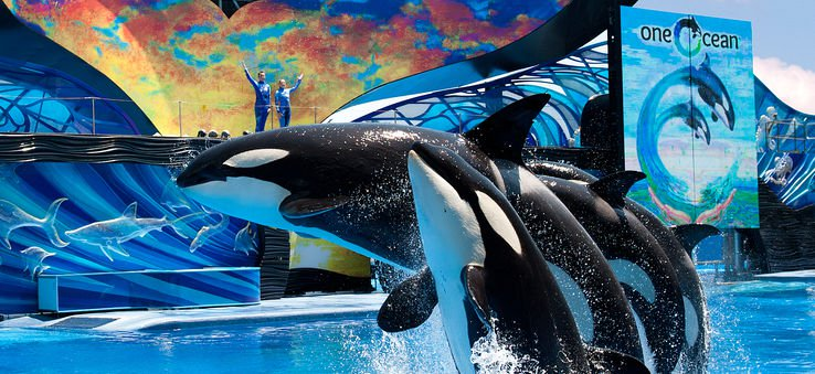 Seaworld Shows